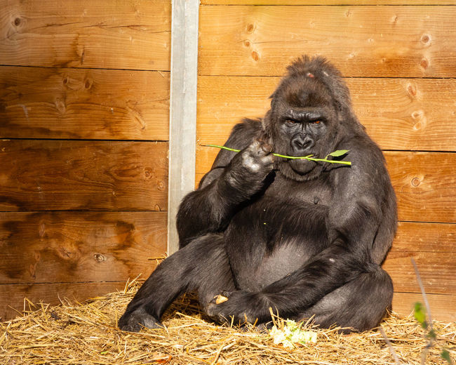 Black dog sitting on wood at zoo