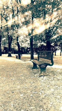 Chair Longchair Panchina Panchinavuota Park Trees Treescollection Vintage Vintage Photo Vintage Style Vintage Filter Vintage Photography Sun Sunlight Sunny Sun_collection Sun Light Raggi Raggiodisole Raggi Di Sole Raggidisole Raggio_di_sole Raggio_di_sole