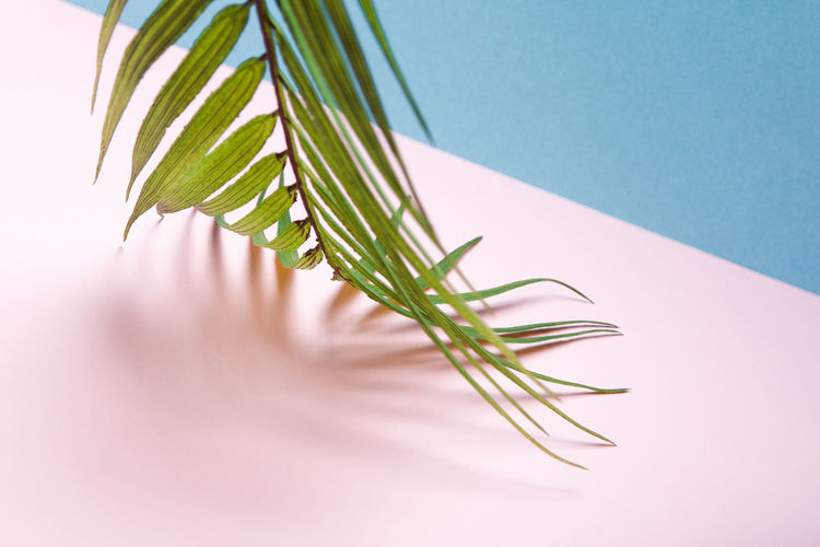 Close-up of plant on table against blue background