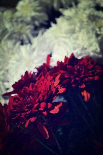 الورد جممميل