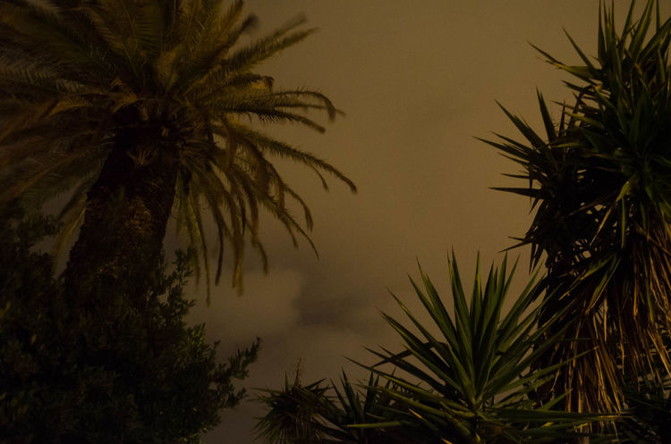 Tree Nature Growth Beauty In Nature Outdoors Sky Palmtree Storm Stormy Weather Stormy Sky Dramatic Sky Dramatic Dramatic Lighting