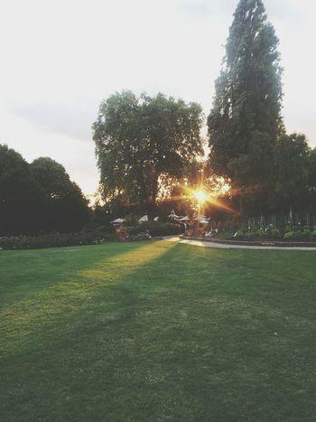 Sunlight Sunset Park