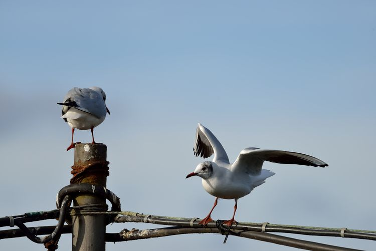 Seagulls on
