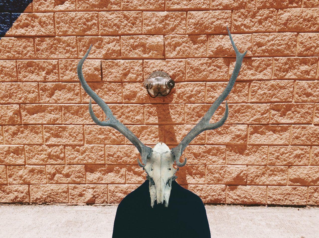 Person wearing deer skull against brick wall