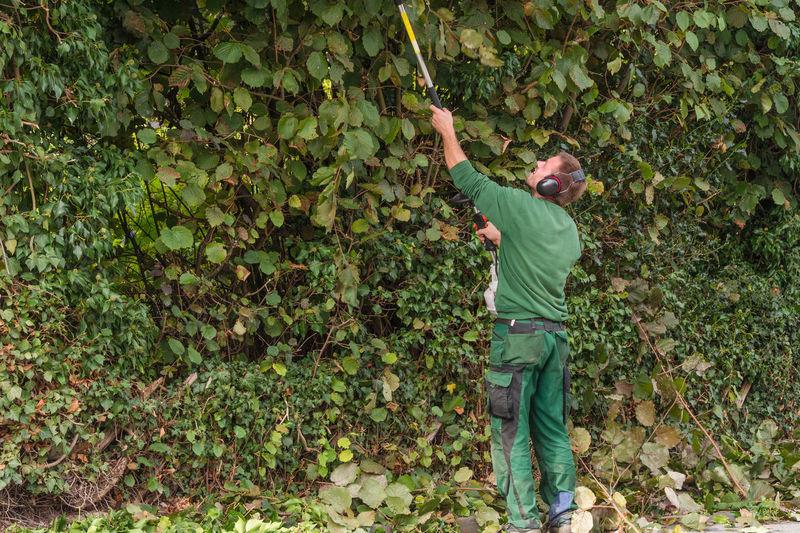 Gardener trimming hedges at park