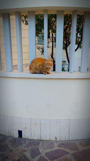 Cat Cats Of Rome Red Cat Cute Rome Animals Of Eyeem Cats Of EyeEm