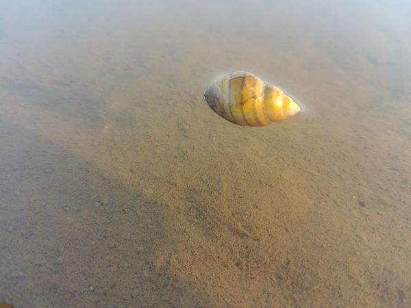 Konch Sand Beach Jellyfish Sea Nature No People Outdoors Water Beauty In Nature Sea Life Day