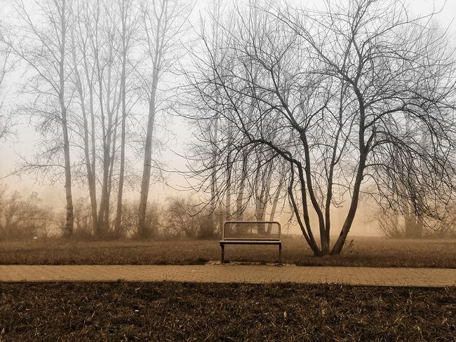 Bank im Nebel 2 Park Baum 🌳🌲 Outdoor Sträucher Herbst Backgrounds Art Herbststimmung Herbstfarben