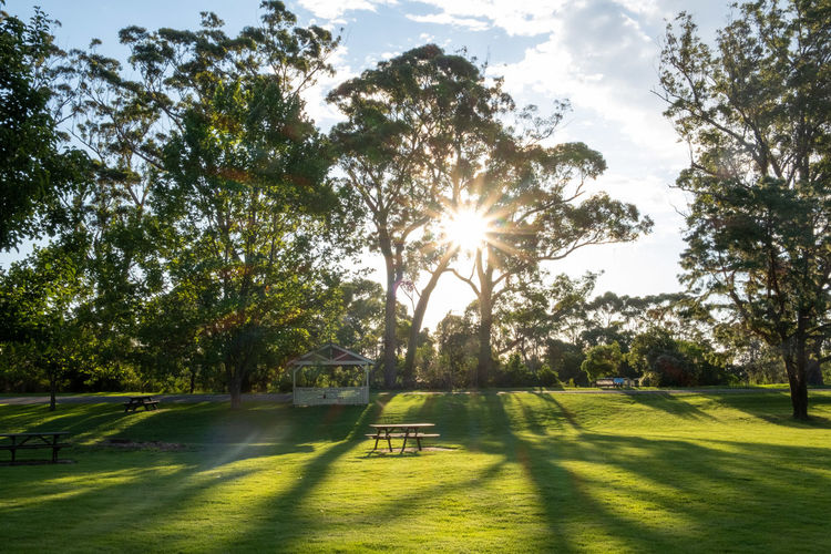Sunlight streaming through trees in park on sunny day
