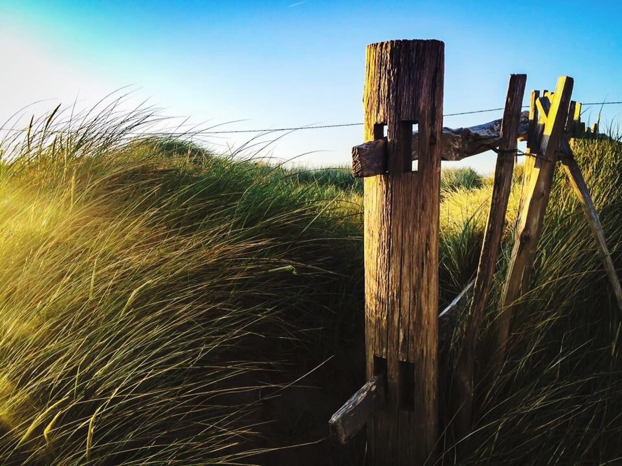 safety, wood - material, no people, protection, grass, field, wooden post, barbed wire, rural scene, outdoors, sky, agriculture, day, close-up, nature