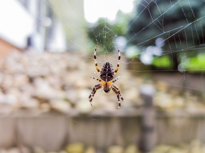 Animal Leg Animal Themes Animal Wildlife Animals In The Wild Close-up Day Focus On Foreground Insect Nature No People One Animal Outdoors Spider Spider Web Weaving Web