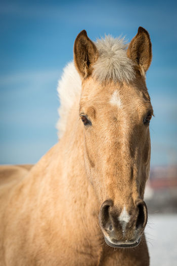 Animal Themes Close-up Day Domestic Animals Horse Livestock Looking At Camera Mammal Nature No People One Animal Outdoors Portrait Sky Standing