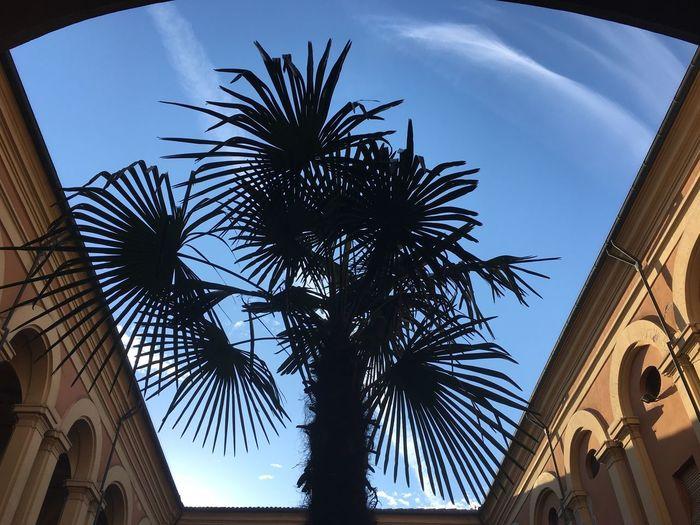Urban Tree (Marseille, Mar 2017) Ph. Valerio Corzani Low Angle View Palm Tree Architecture Built Structure Tree Day Building Exterior Sky No People Outdoors Marseille Marsiglia France Urban Geometry Geometric Shape Geometry