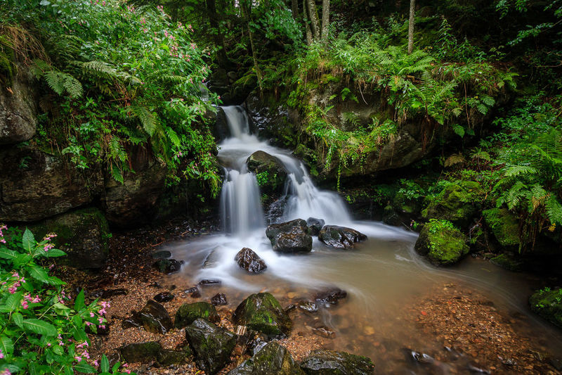 Todtnauer Wasserfälle Beauty In Nature Blurred Motion Day Flowing Water Forest Growth Long Exposure Motion Nature No People Outdoors Plant River Rock - Object Scenics Tranquil Scene Tranquility Tree Water Waterfall
