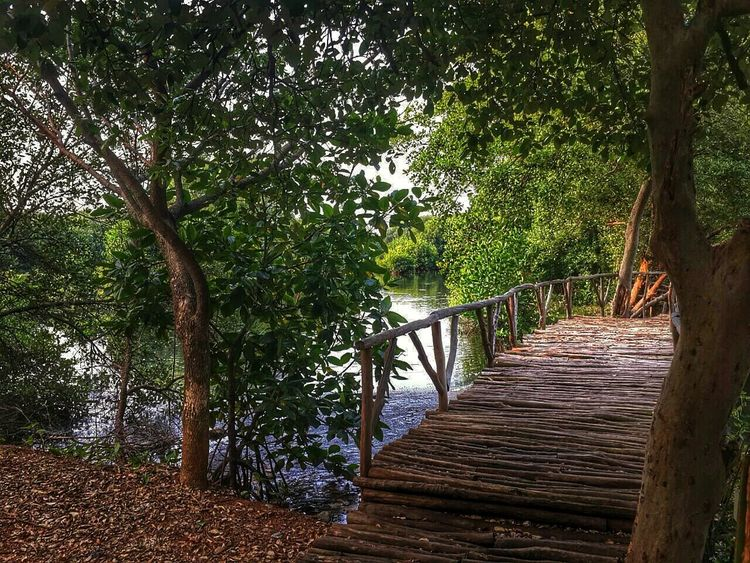 Taking Photos Nature_collection Eyem Nature Lover Mangrove natur place