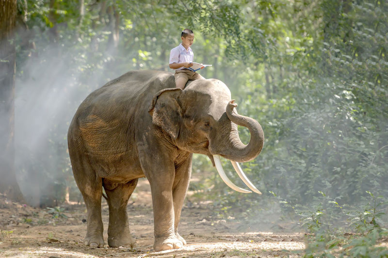 Man riding elephant standing on land
