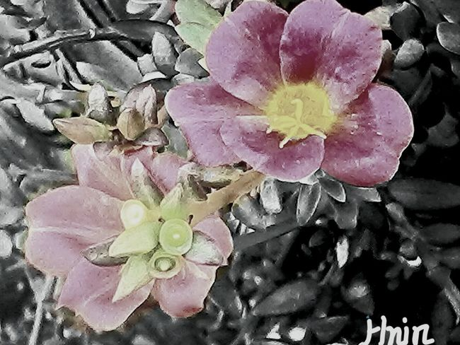 RePicture Style Flower