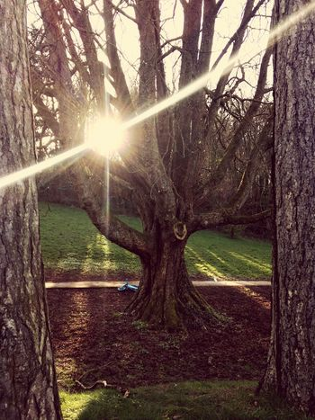 EyeEmBestPics Sunbeam Sunlight Tree Lens Flare Nature Sun Tree Trunk Tranquility No People Beauty In Nature Growth Outdoors Day Tranquil Scene Grass EyeEm Gallery IPhoneography EyeEm Best Shots Spirituality Nature Eyeemphotography Nature_collection Nature Photography Naturelovers