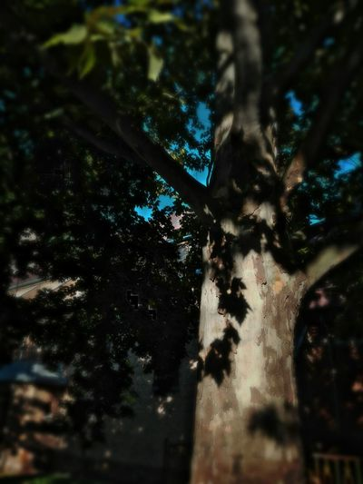 Enjoying The Sun Tree Trunk Selective Focus Nature Outdoors Green Color Beauty In Nature Day No People Smartphonephotography Smartphone Photos Smartphone Photography Smartphone Photos Smartphone Photographer Smartphonephotography Vibrant Color Focus On Foreground Nature Plants In The Park