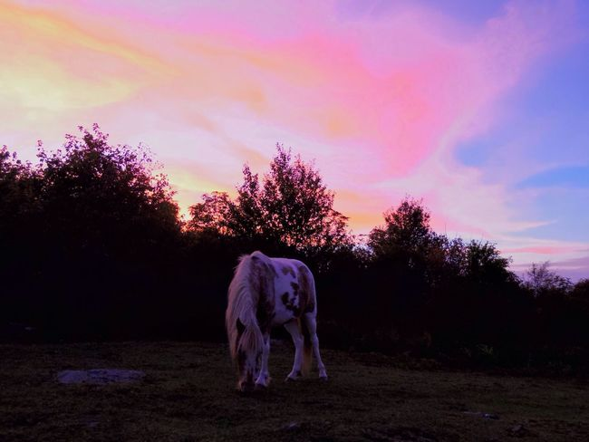 Grayson Highlands National Park wild ponies, Sunset Sky Animal Themes