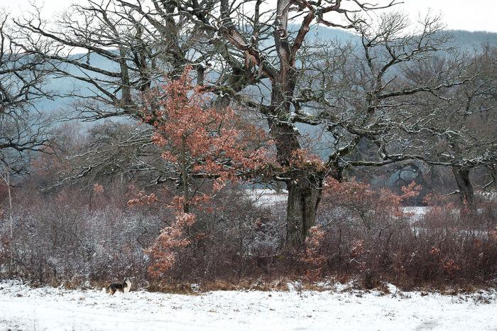 Oak Trees Beauty In Nature Day Nature Oaks Outdoors Tree Winter