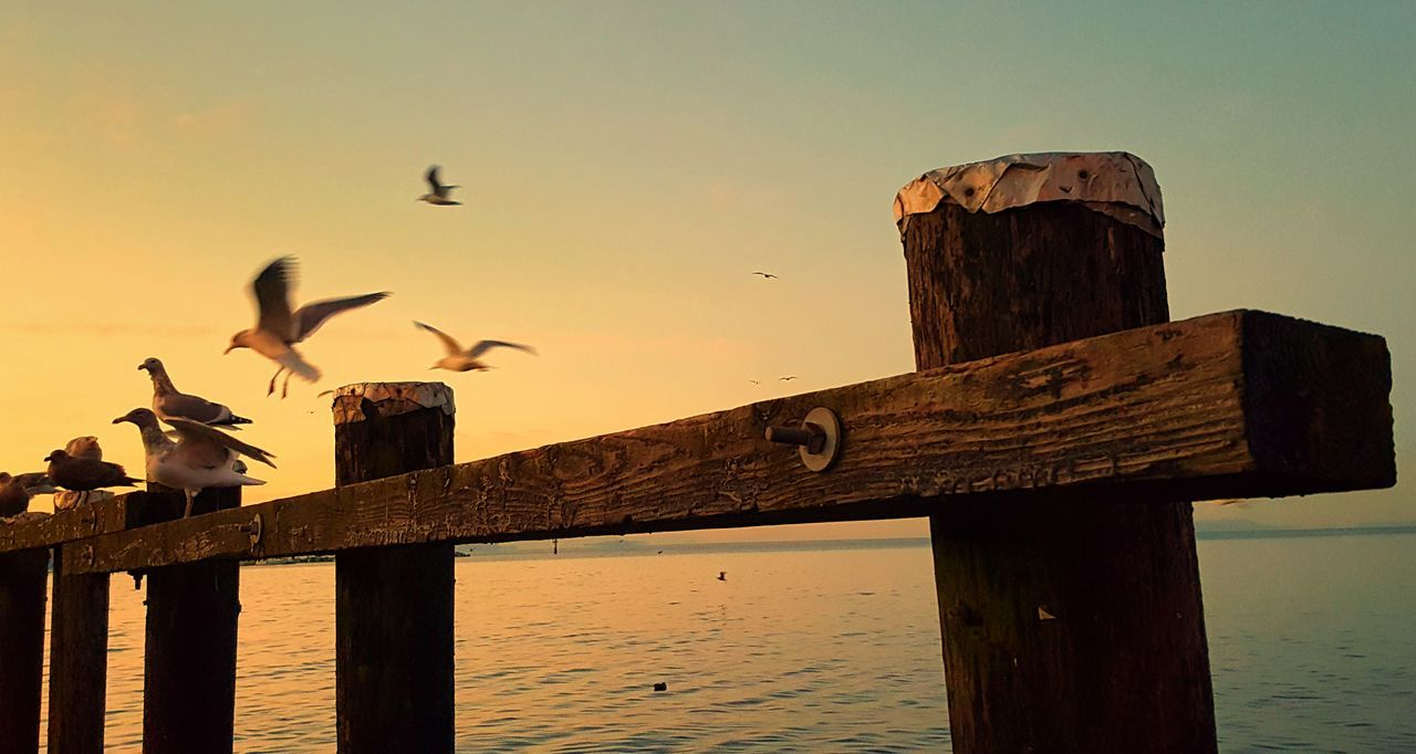 bird, vertebrate, animal, animal themes, animals in the wild, animal wildlife, group of animals, sky, wood - material, water, perching, sea, large group of animals, nature, sunset, no people, railing, pier, wooden post, post, flock of birds, seagull, outdoors