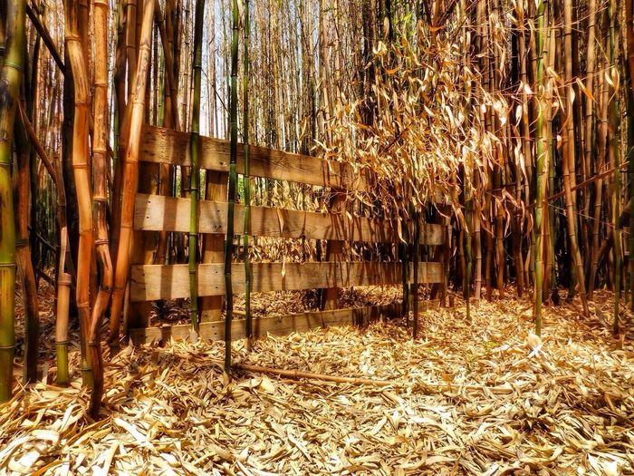 Fences Fence Bamboo Forest Bamboo Streamzoofamily Outside Photography June 2016 Huffington Post Stories Rhode Island New England  Fences & Beyond Outdoors Outdoor Photography