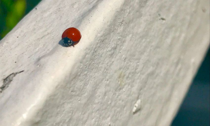 Close-up of ladybug on snow