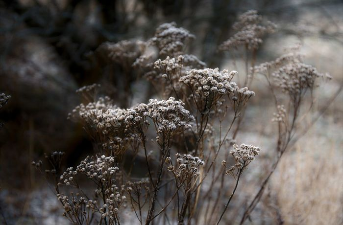 Wrotycz Nature Outdoors Tansy Withered