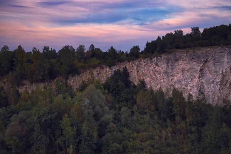 Panoramic shot of trees on landscape against sky