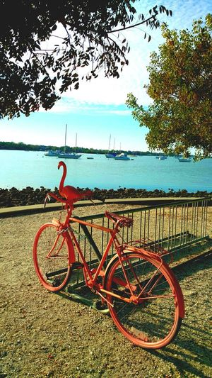 Flamingo Bike Flamingo Pink Bike Unique Design Unique Style Vintage Bike Bicycle Parking Ocean View Antique Sarasota Florida Sarasotabay Check This Out 2 Wheel Parked Park View Bay Side Retro Style Pink Flamingo