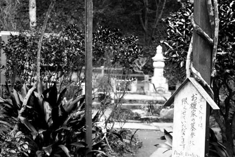Tokyo Japan Monochrome _ Collection Black And White Streetphotography_bw Black And White Photography Travel Destinations EyeEm Best Shots - Black + White NEM Black&white Monochrome Bnw_society NEMstreet Outdoors EyeEmRussianTeam EyeEm Gallery Garden Nature Plant In Front Of