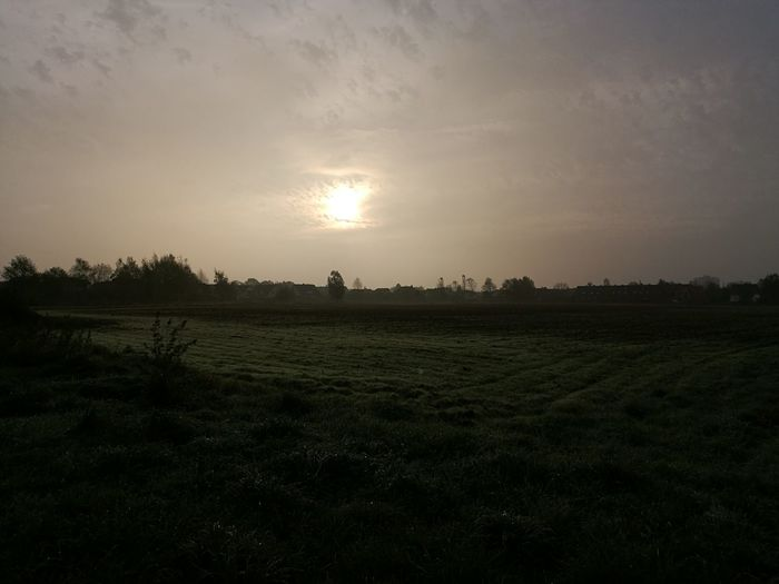 The Sun Behind The Morning Fog Agriculture Field Rural Scene Landscape Crop  Tree Nature No People Outdoors Sky Day Beauty In Nature Freshness Beauty In Nature