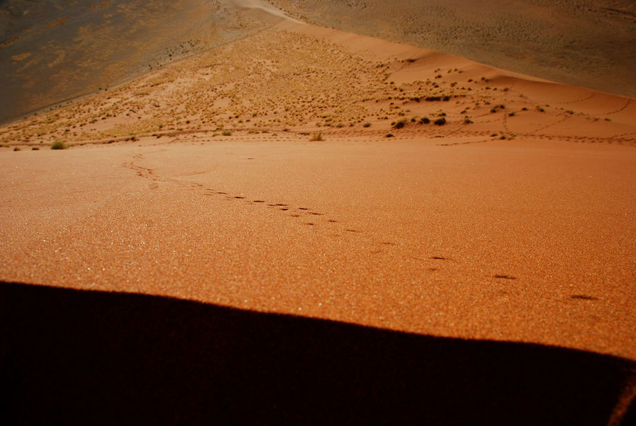 On the top of Dune45. Sossusvlei, Namibia Africa African African Beauty Desert Deserts Around The World Dune Dune 45 Made In Namibia Namib Namib Naukluft National Park Namibia Nature Red Sand Sand Dunes Sossusvlei Sossusvlei Desert - Namibia Travel Travel Photography The Great Outdoors With Adobe The Great Outdoors - 2016 EyeEm Awards 43 Golden Moments