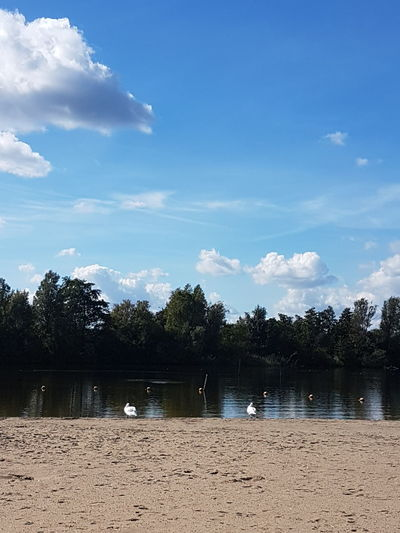 look at the lake Tree Beach Sand Sky Cloud - Sky