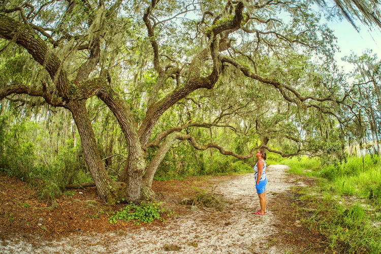 Laura checks out a large live oak tree along one of the trails at Lake Louisa State Park in Florida during our visit last summer. Read more about it at the Burnsland website: http://b-l.pics/lakelouisatree Lake Louisa Live Oak Adventure Day Florida Landscape Nature One Person Outdoors Rural Scene Standing State Park  Trail Travel Destinations Tree