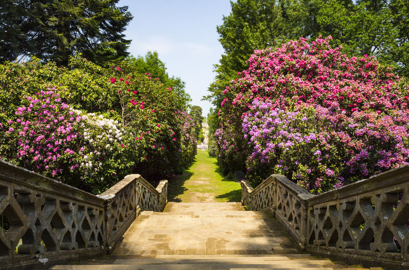 Stairs in Hever Gardens, Hever Castle & Gardens, Hever, Edenbridge, Kent, England, United Kingdom Beauty In Nature Day Flower Growth Nature No People Outdoors The Way Forward Tree