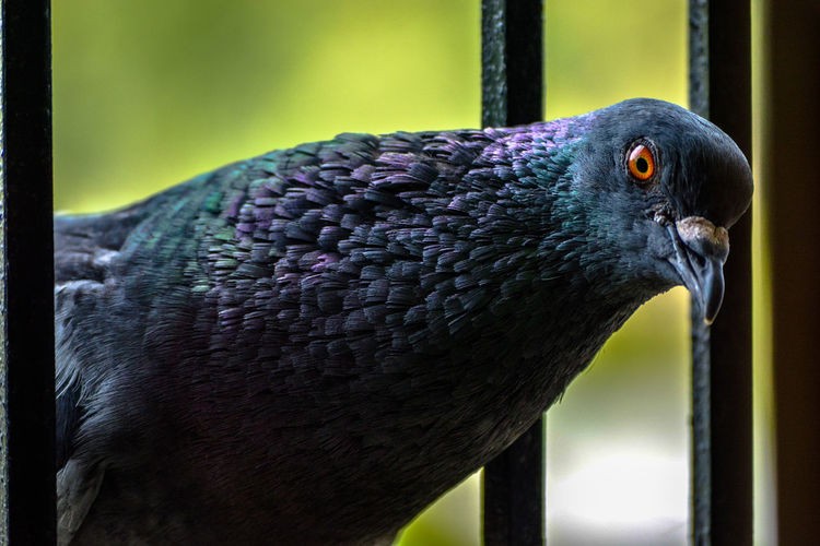 Animal Themes Animals In The Wild Beak Beauty In Nature Bird Close-up Day Focus On Foreground Guwahati Nature No People One Animal Outdoors Perching Pigeon
