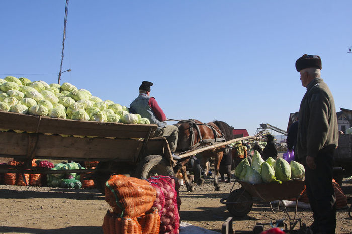 Bukovina Cabbage Clear Sky Day Fair Farmers Farmers Life Farmers Market Farmersmarket Food For Sale Healthy Eating Horse Market Marketplace Men Occupation One Animal Outdoors People Real People Real People, Real Lives Romania Vegetables Waggon-driving