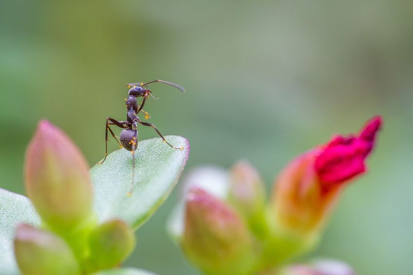 Hand held focusing is tough. AF very poor in cloudy weather. Today's ant test did not go so well. I may need to micro adjust the lens too. Sigma 180mm F2.8 Macro_collection Macro Photography Macro Insects Nature Photography