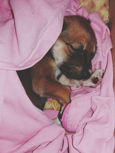 Pets Dog Pink