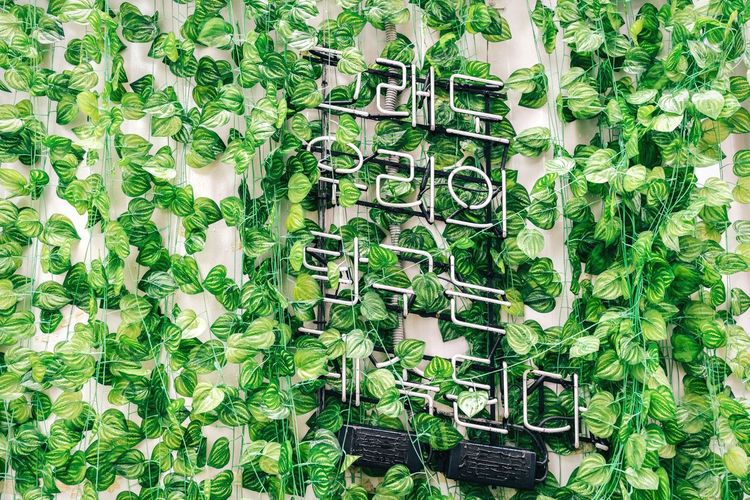 Good lesson Leaf Green Color Plant Growth Day Ivy Text Outdoors No People Communication Full Frame Herb Nature Close-up Freshness Sentence Korean Alphabet HANGUL Hangeul Non-western Script Wall Art Leaves Saying Written Words Arts Culture And Entertainment