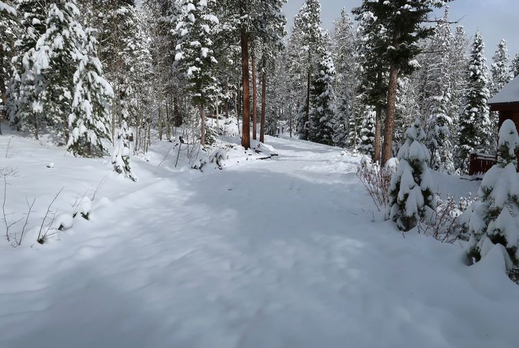Wintry landscape of snow covered road and trees in Colorado Snow Winter Cold Temperature Tree Plant Beauty In Nature Scenics - Nature No People Tranquil Scene White Color Covering Outdoors Landscape Environment Day Forest Tranquility Nature Land