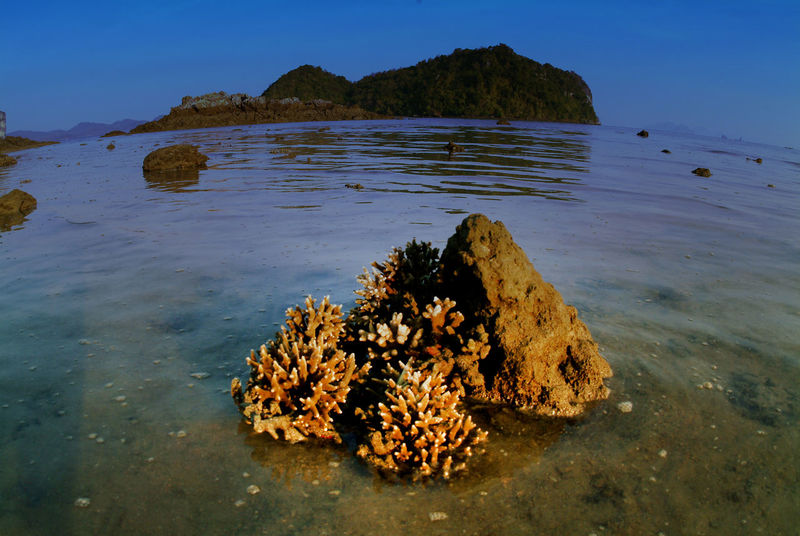 The coral on the sand with sea water are dropping in Andaman sea , Southern of Thailand . Habitat Interesting Life Sealife Beach Beauty In Nature Coral Day Dropping Environment Island Marine Mountain Nature No People Ocean Outdoors Reef Rock - Object Scenics Sea Tranquil Scene Tranquility Travel Destinations Water