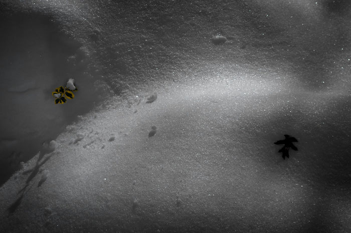 Day High Angle View Leaves Light And Shadow Nature Nature No People Outdoors Plants Shadows Snow Snow Bank Water