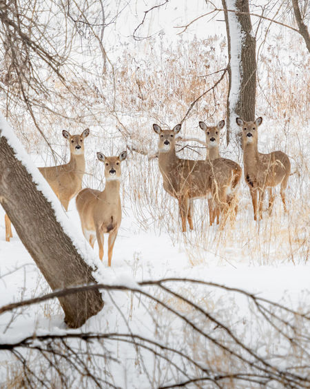 View of deer in snow