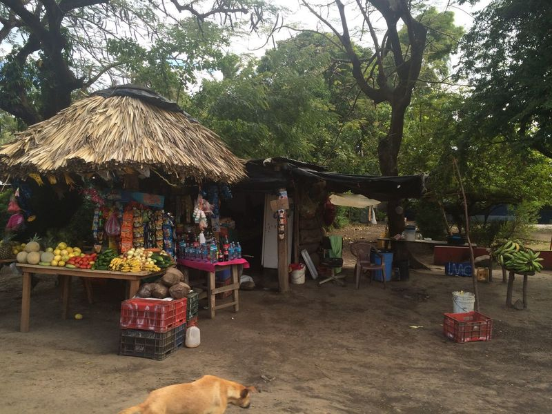 Food stand on the road-side in Nicaragua. Day Food Stand Homeless Dog Nature Nicaragua No People Outdoors Roadside Thatched Roof Tree