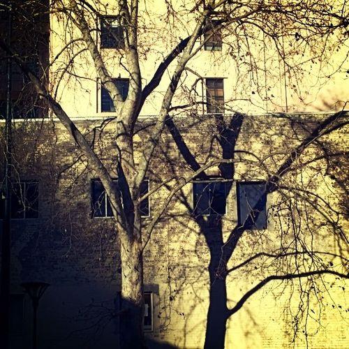 Afternoon Shadowshapes Wpphoto Winphan sydney nokialumia1020 microsoft