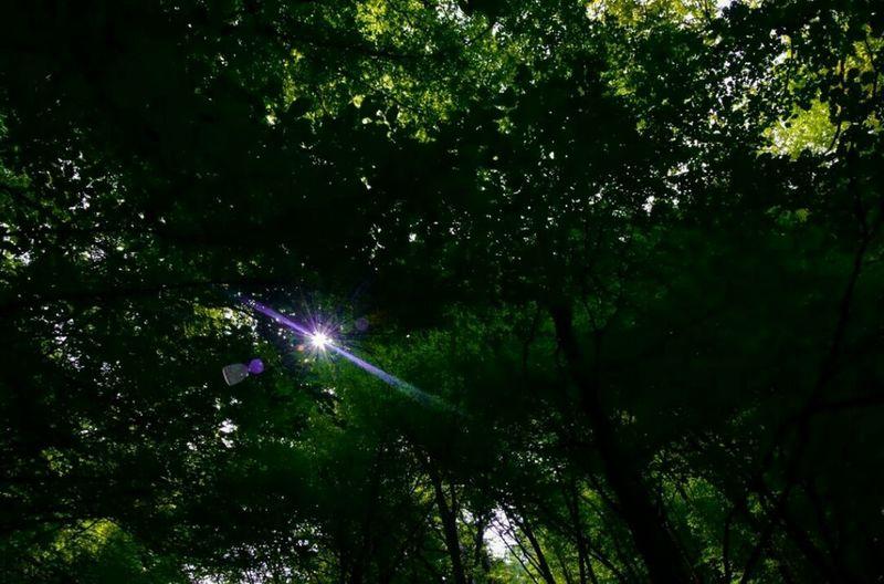 🌳💥🌳Trees Forest Sun Beauty Summer Naturegood Nikon Nikonphotography