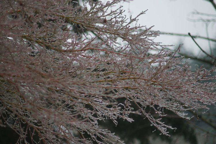 Close-up of tree branches